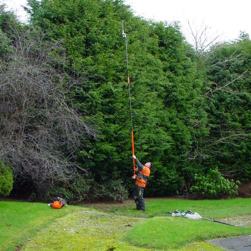 Qualified Treework Specialists