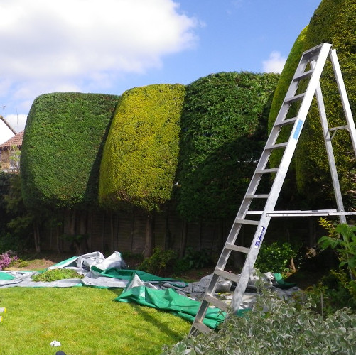 Hedge Trimming and Maintenance Services