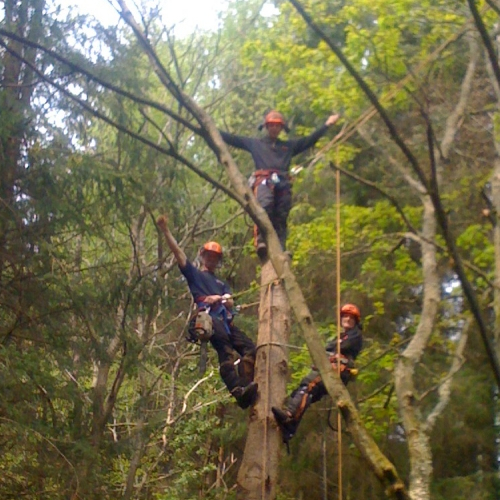 Qualified Tree Work Specialists
